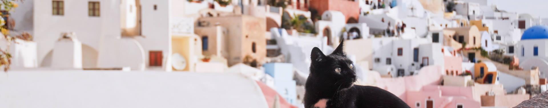 Santorini Pet Friendly Hotels