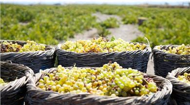 Domaine Sigalas winery - Wineries - Santorini